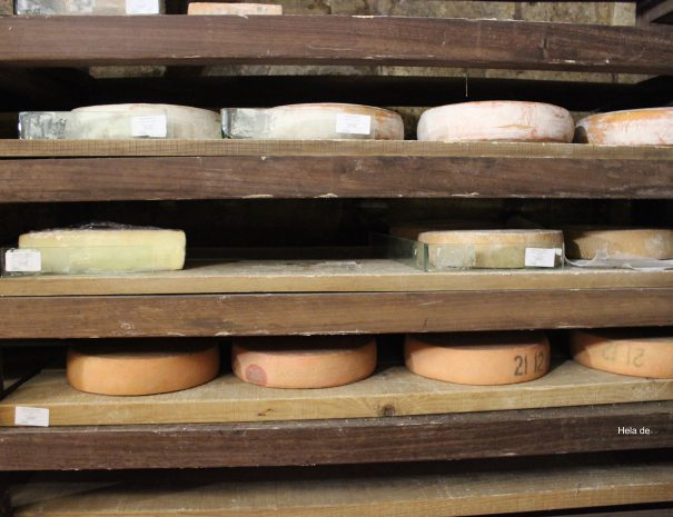 hard raw cheeses